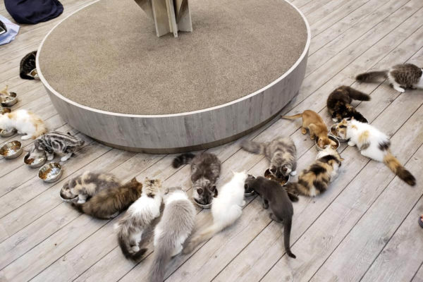 「猫カフェ MOCHA(モカ)立川店」に行ってきた!ごはんタイムがめちゃかわいい