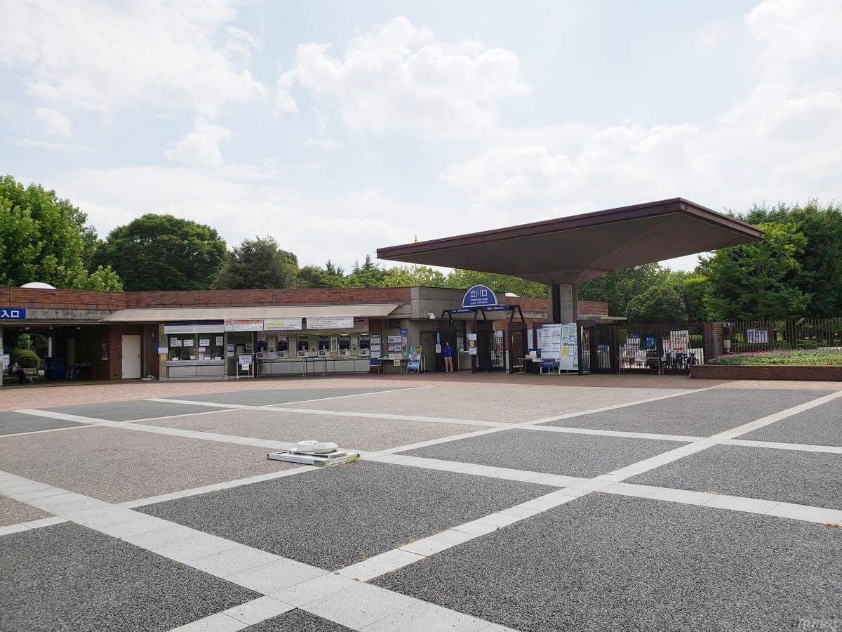 昭和記念公園のひまわり畑