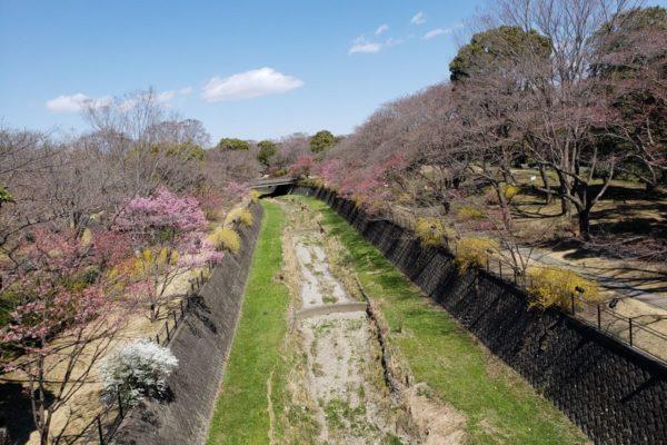 昭和記念公園フラワーフェスティバル2019に行ってきた。3月下旬の開花状況はこんな感じ