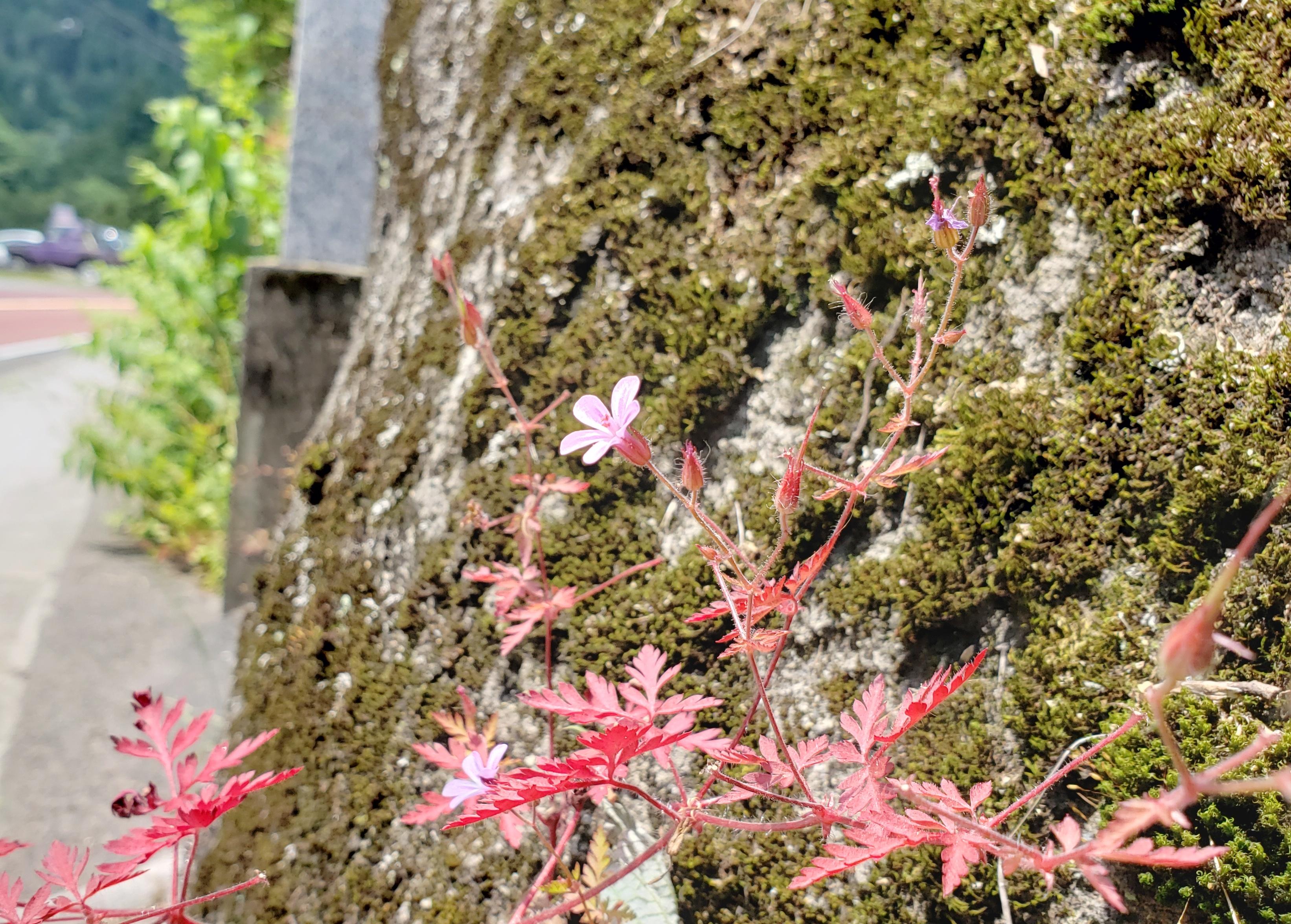 崖に咲く赤い花