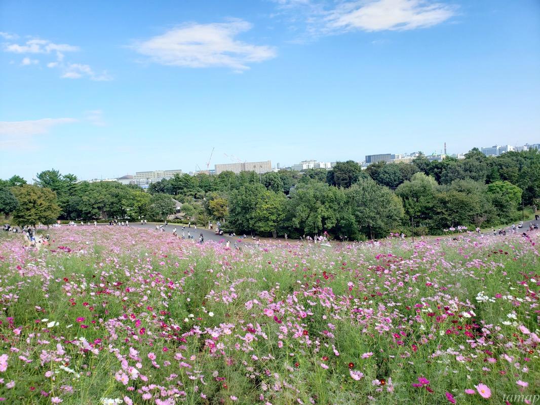 昭和記念公園の花の丘