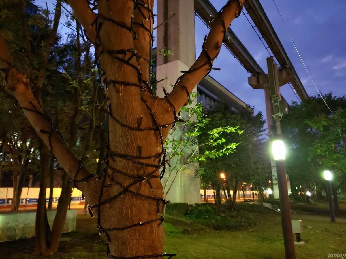 サンサンロードの点灯する前の街路樹