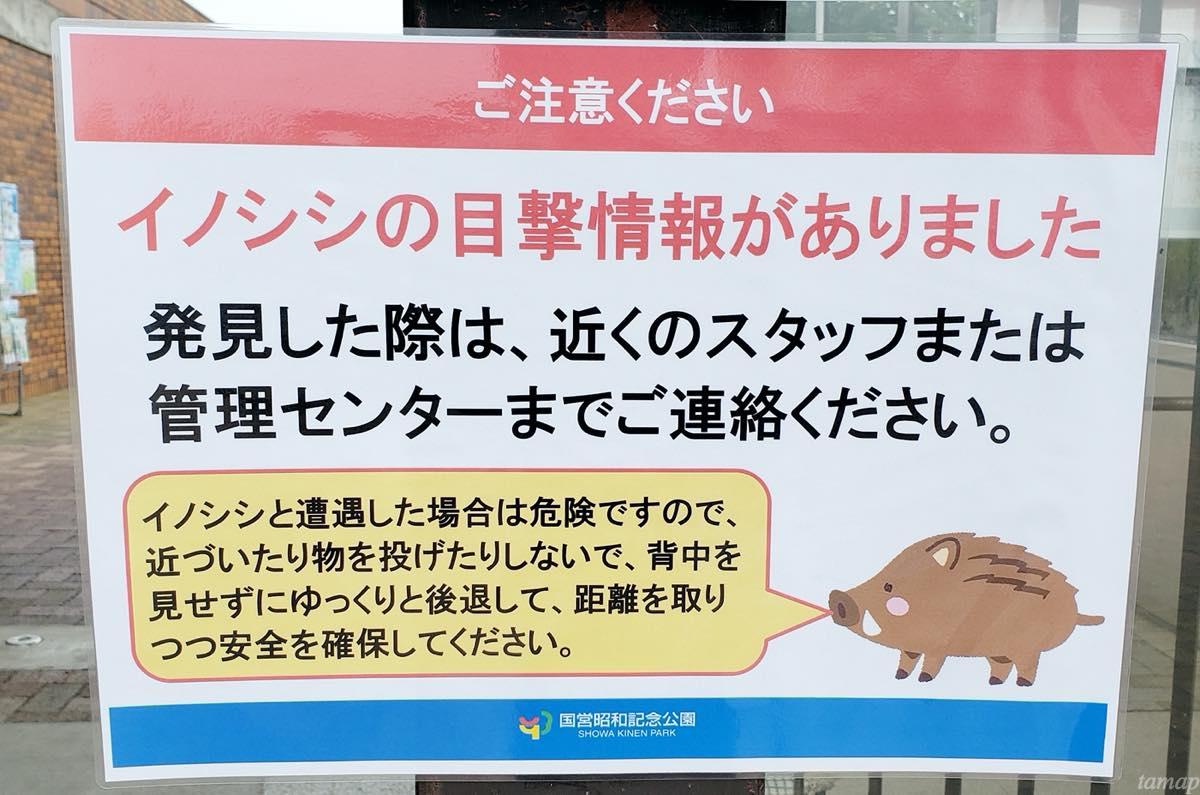 昭和記念公園のイノシシ出没のポスター