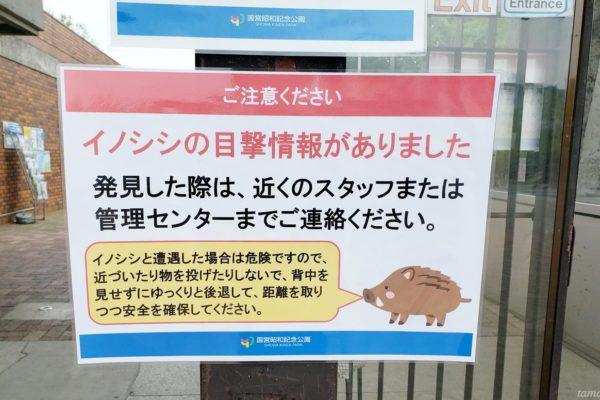 【追記:10/22通常開園へ】昭和記念公園内に野生のイノシシ出没!安全確保のため休園に