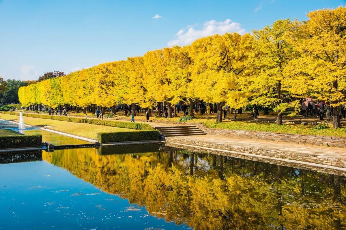 昭和記念公園いちょう並木