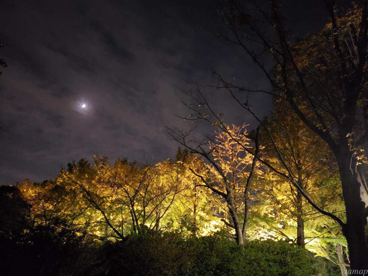イチョウ並木のライトアップ