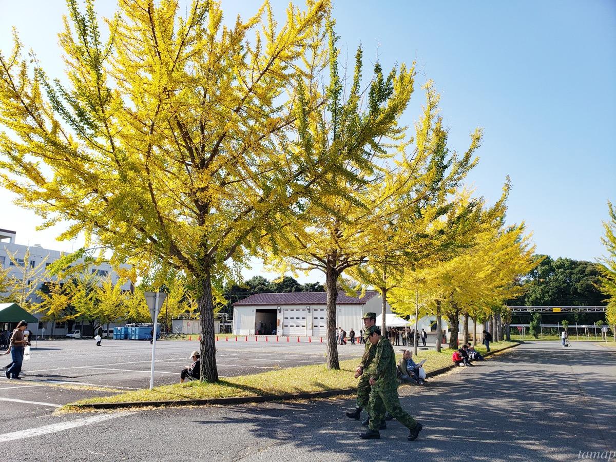 立川駐屯地のイチョウ並木