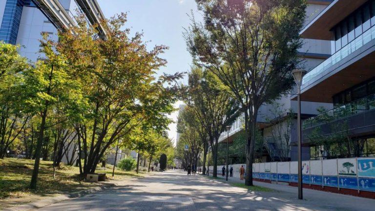 GREENSPRINGS2019年11月の建設状況「サンサンロード」