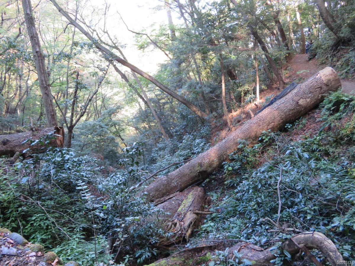 高尾山のハイキングコース