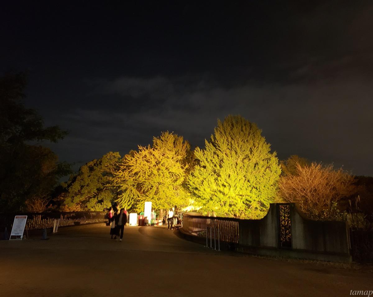 イチョウ並木の会場