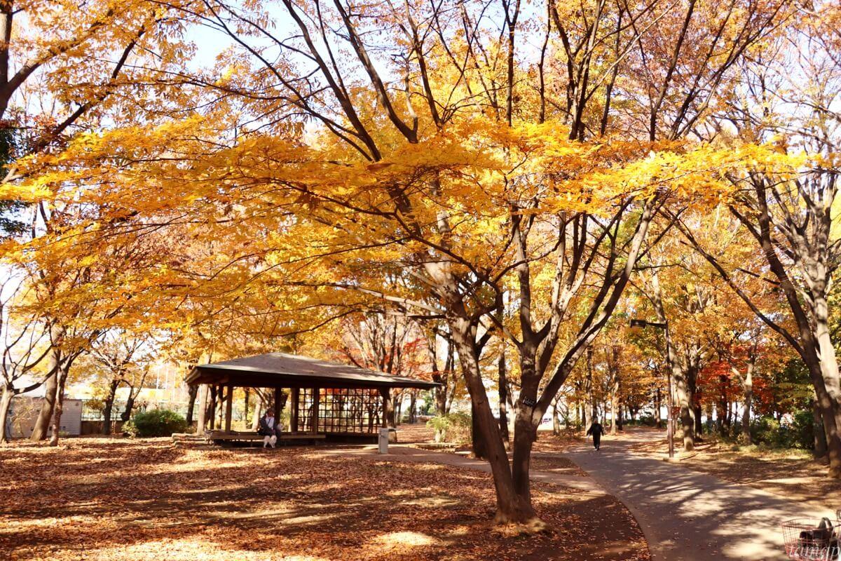 東大和南公園の木々たち
