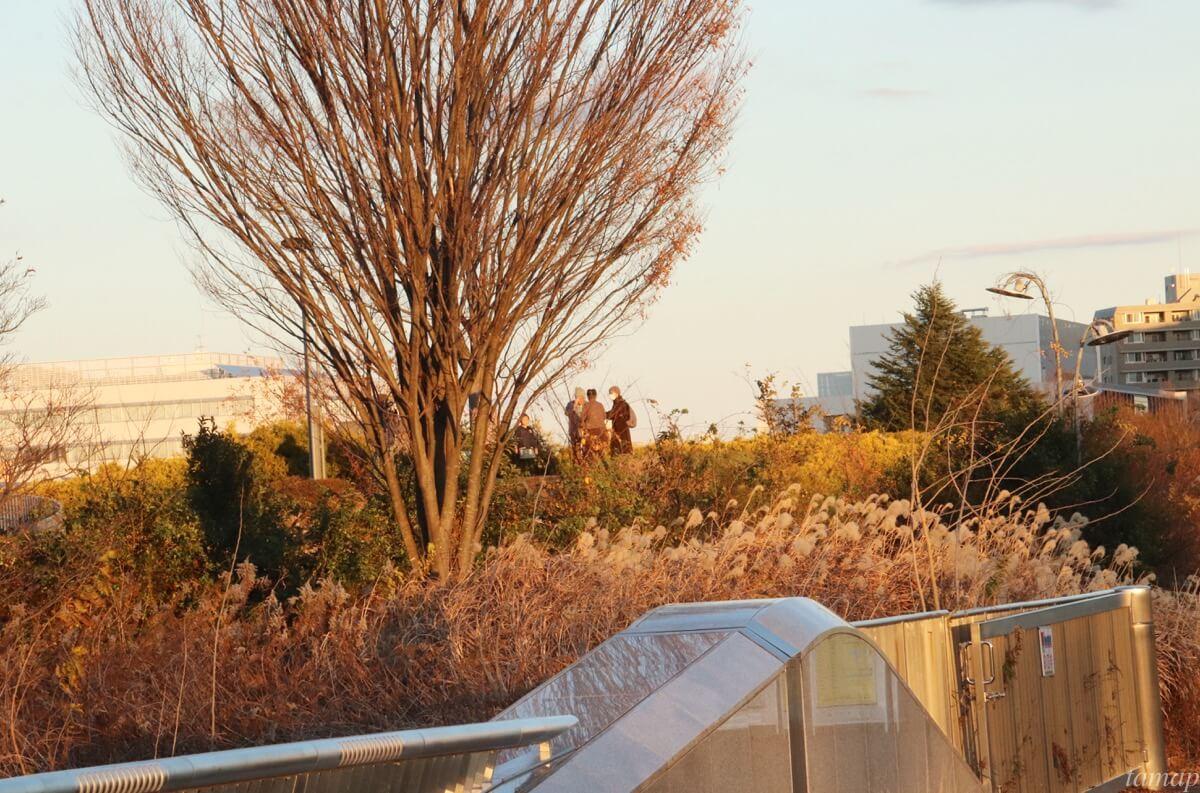 昭和記念公園の丘