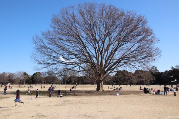 昭和記念公園お正月イベント「オリジナル凧づくり」。空を見てたらすごい凧が上がっていた