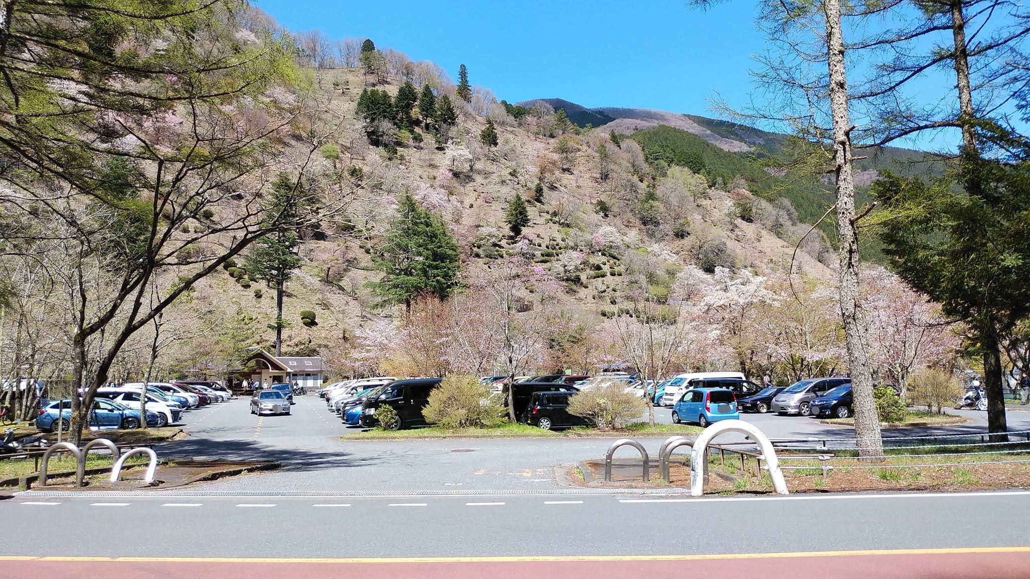 奥多摩町の駐車場に満車の車たち